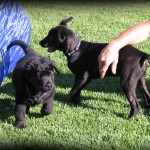 The dogfather puppy school form 3